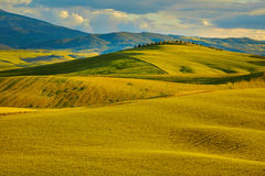 Beautiful view of green fields in Tuscany Stock Photos