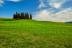 Beautiful view of green fields in Tuscany Royalty Free Stock Photo