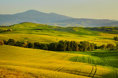 Beautiful view of green fields in Tuscany Royalty Free Stock Photos