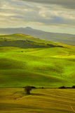 Beautiful view of green fields in Tuscany Royalty Free Stock Image