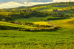 Beautiful view of green fields in Tuscany Stock Photography
