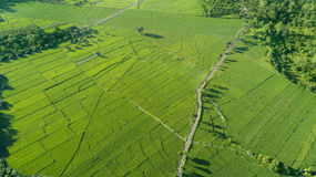 Beautiful view of green paddy field Royalty Free Stock Images