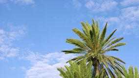 Beautiful view of green palm trees against blue cloudy sky. Green palms with blue cloudy sky. Beautiful view of tropical trees against blue sky stock footage