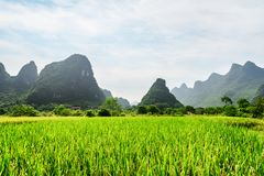 Beautiful view of green rice field and scenic karst mountains royalty free stock image