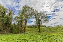 Beautiful view of green vegetation on a wonderful day. With a blue sky and white clouds between Elsloo and Meers South Limburg in the Netherlands Holland stock photo