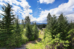 Beautiful view of greenery from cabin style home. Royalty Free Stock Photography