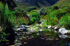 Africa- The Beautiful Harold Porter National Botanical Garden stock image