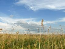 Beautiful view on herb meadow and scenic sky. On a background at summer Stock Photography