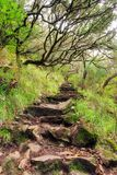 Levada trail stairs stock photography