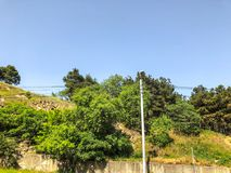 A beautiful view of the hillock with blossoming trees in the green grass against the sky.  royalty free stock photography