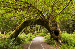 The Beautiful view of hoh Rain Forest Royalty Free Stock Images
