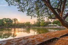 View of a huge tree with lake in Bangkok city, Thailand. Beautiful view of a huge tree with lake in Bangkok city, Thailand royalty free stock photo