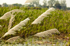 Beautiful view of Indian Agriculture Field Stock Image