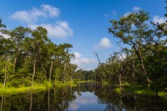 Beautiful view inside of the forest in the Chitwan, Nepal royalty free stock photography