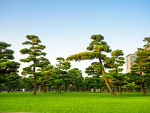 Beautiful view of japanesse trees in Hibiya park in Tokyo, Japan.  royalty free stock images