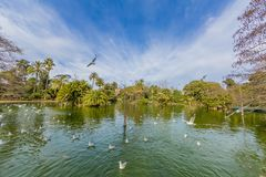 View of the lake with birds flying and in water with green vegetation royalty free stock images