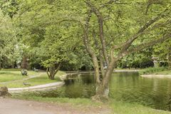 View of a lake with trees next to a dirt road royalty free stock image
