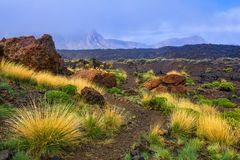 Beautiful view of lava fields with sparse vegetation in Teide Na. Beautiful view of  lava fields with sparse vegetation in Teide National Park, Tenerife, Canary Stock Photography