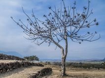 Beautiful view of a leafless tree with a blue sky stock photo