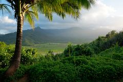 Tropical View of Hawaiian Outlook in Kauai. Beautiful view looking out over the mountains in Kauai, Hawaii. Palm Trees in the foreground. Crops and mountains in royalty free stock photography