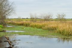 Beautiful view of marsh. Beautiful view of a marsh in Brazos Bend state park Stock Image