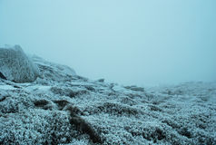 Beautiful view of the misty top of the Carpathian mountains in winter Royalty Free Stock Photos