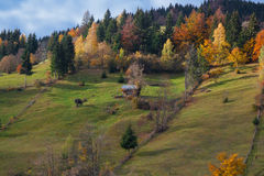 Beautiful view from Moeciu Romania Stock Image
