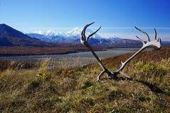 View on Mount Denali in Alaska stock photo