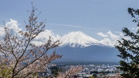Beautiful view of Mount Fuji covered with snow on a sunny day, with flowered tree in the foreground, Japan. Asia royalty free stock photography