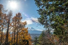 View of Mount Fuji with a beautiful foreground of colorful pine trees from Chureito pagoda viewpoint in sunny day, Japan. Beautiful view of Mount Fuji with a royalty free stock photo