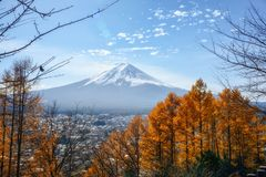 View of Mount Fuji with a beautiful foreground of yellow pine trees from Chureito pagoda viewpoint, Japan. Beautiful view of Mount Fuji with a beautiful stock photos
