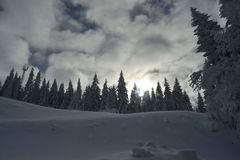 Vacation on the mountain, Jahorina. stock photos