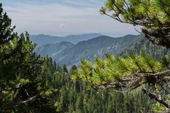 Beautiful view of the mountain peaks from pine forest. Altai Krai. Beautiful view of the mountain peaks from the pine forest. Altai Krai Royalty Free Stock Photos