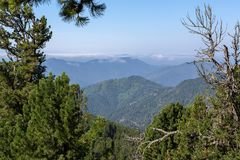 Beautiful view of the mountain peaks from pine forest. Altai Krai. Beautiful view of the mountain peaks from the pine forest. Altai Krai Royalty Free Stock Photography