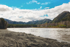 Beautiful view of mountain river in summer,Altai Mountains,Russia Royalty Free Stock Image