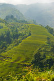 Beautiful View of mountains contain terraced fields Royalty Free Stock Photos