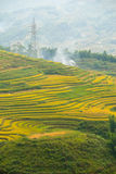 Beautiful View of mountains contain terraced fields Stock Images