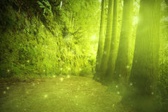 Beautiful view in a mysterious forest with fairytale light Stock Image
