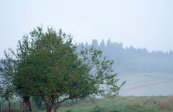 Beautiful view of the natural rural landscape against the backdrop of the forest in a foggy haze royalty free stock images