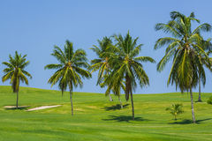 Beautiful view of natural tropical meadow field wi Stock Image