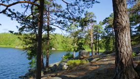 Beautiful view on nature landscape from rocky forest hill. Tall trees, green plants, yellow grass and lake down on the coast line. Beautiful nature backgrounds stock video