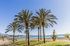 Beautiful view of an oasis with green grass and palm trees on the beach royalty free stock photos