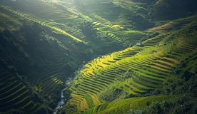 Free Beautiful View Of Rice Terrace At Mu Cang Chai Royalty Free Stock Photos - 168491028