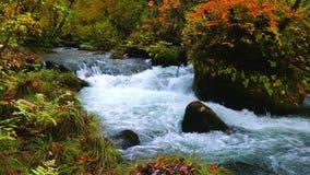 Beautiful view of Oirase mountain stream at Aomori Prefecture, Japan in autumn.