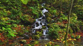 Beautiful view of Oirase Mountain Stream flowing down from the mountain