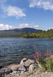 Beautiful view over calm lake with flowers on the shore, Sweden Stock Photography