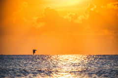 Beautiful view over the sea. Scenic sunrise and flying bird back royalty free stock photo