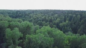 Beautiful view over the tops of pine forest. Clip. Aerial view. From above.  stock video footage