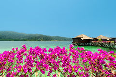Beautiful view of overwater bungalows and bougainvillea. View of overwater bungalows and bougainvillea.Beautiful view of water bungalows in resort,shore and royalty free stock photos