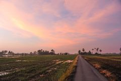 A beautiful view of paddy field area. At north of Malaysia Royalty Free Stock Image